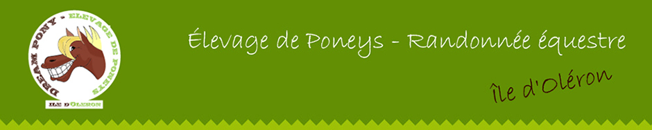 Dream Pony - Ferme équestre à l'île d'Oléron